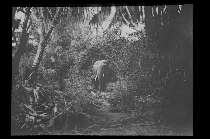 Vivienne von Wattenwyl - Der Elefant
